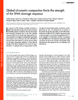 Global chromatin compaction limits the strength of the DNA damage response
