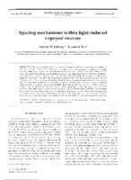 Spacing mechanisms within light-induced copepod swarms